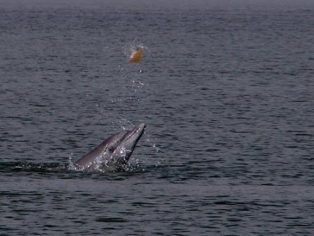 delfinjpg